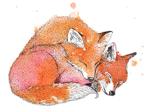 Sleeping fox pair