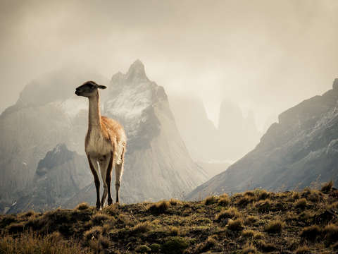 Lone sentry of the andes