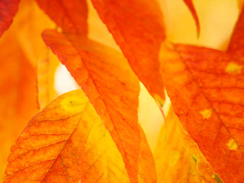 Autumn leaves fire light