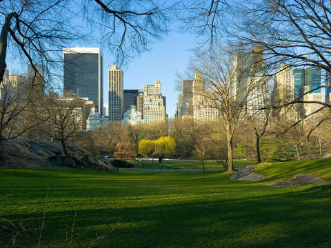 Manhattan from central park