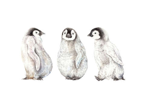Playful watercolor penguins