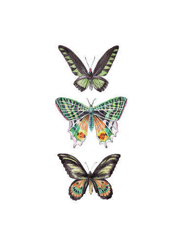 Rainbow butterflies and moths