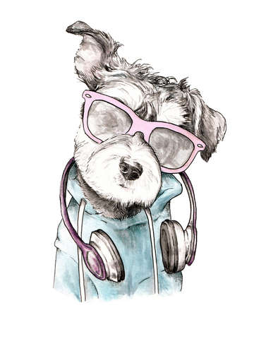 Cool schnauzer with headphones