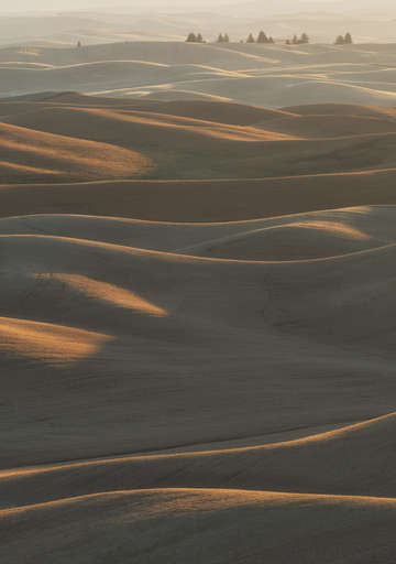 Palouse browns 2