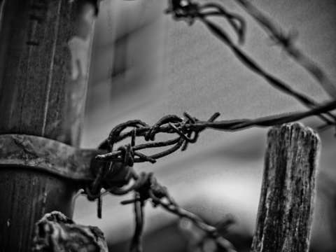 Barbed wire fence 2