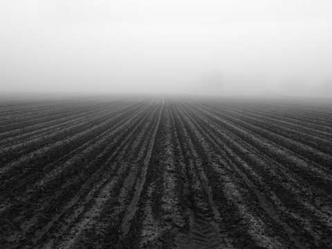 Plowed field and fog