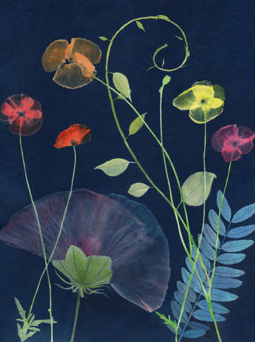 Cyanotype painting poppies 2020 3
