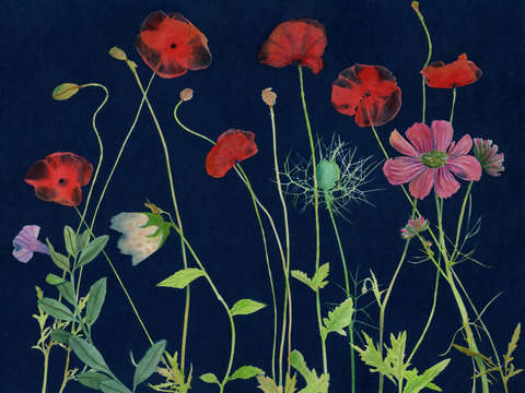 Cyanotype painting poppies 2020 1