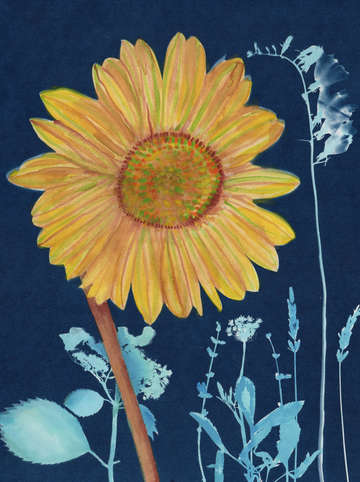 Cyanotype painting sunflower 2020 1