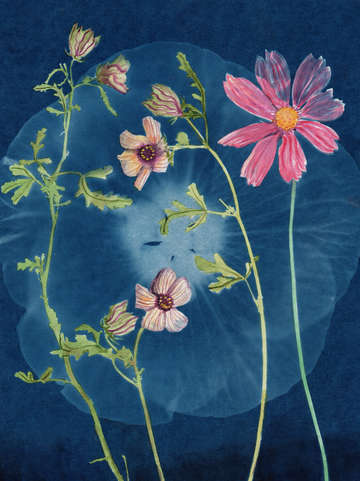 Cyanotype Painting (Venice Mallow, 2020, 1)