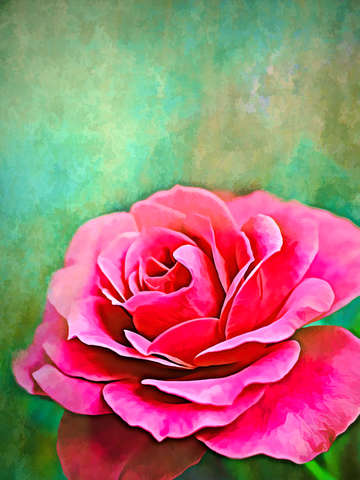 Exquisite pink rose