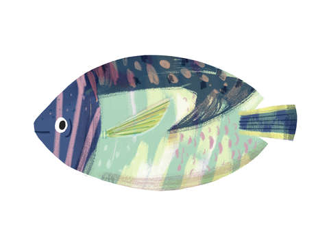 Patchwork dory fish
