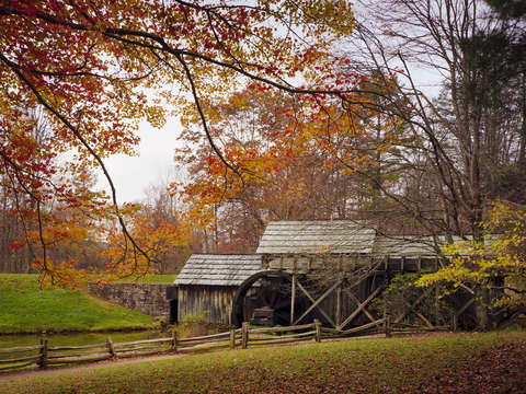 Autumn Canopy at Mabry Mill
