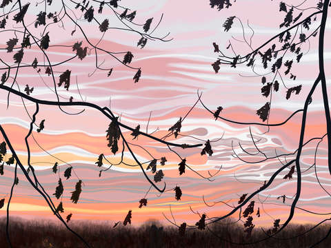 Oak Leaves and Morning Sky
