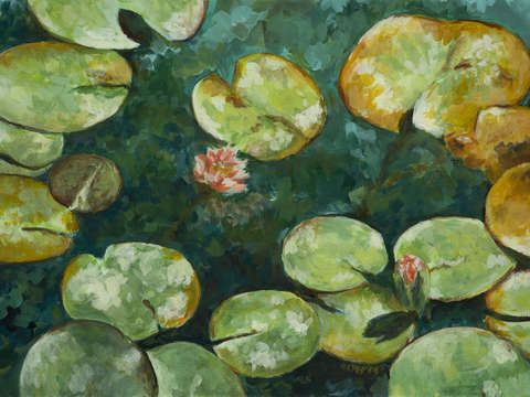 Tranquil lily pond