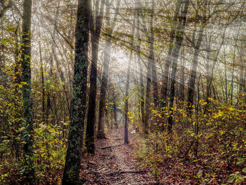 Sunrays through henning conservation woods