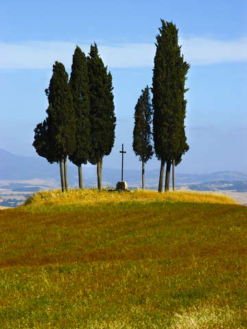 Tuscan cypress trees san quirico dorcia italy