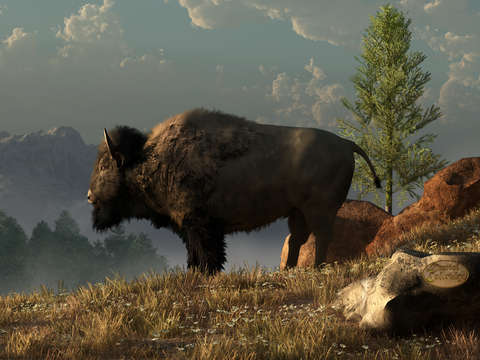 The great american bison