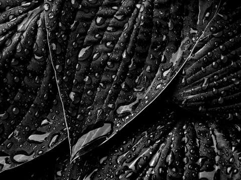 Dark wet leaves