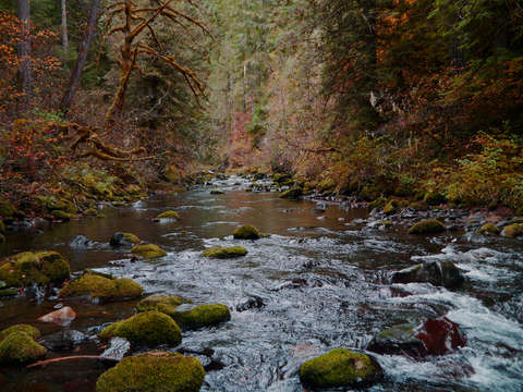Big quilcene river ii