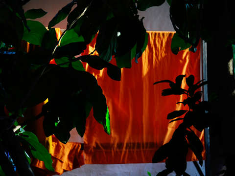 Orange in the evening